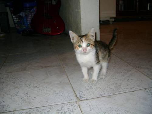 Foto de konejitosmuertos del 25/11/2009
