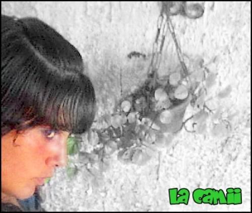 Foto de algohueeqaa del 29/12/2009